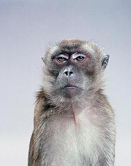 Unamused Monkey