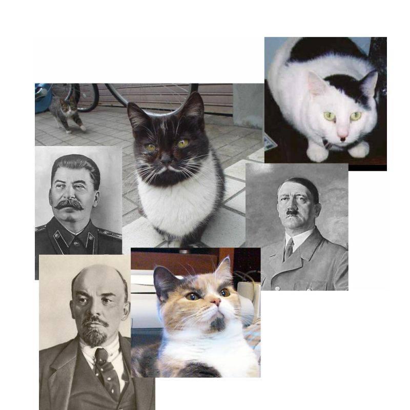 Fascist Cats